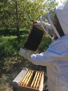 Bee_Keeping_Wootton_Park_Pods